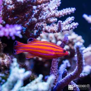 熱帶水族寵物魚