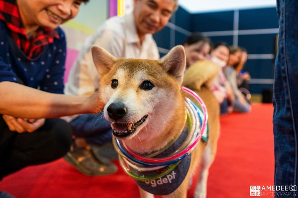 高雄展覽館亞洲樂齡智慧生活展治療犬柴犬Poppy